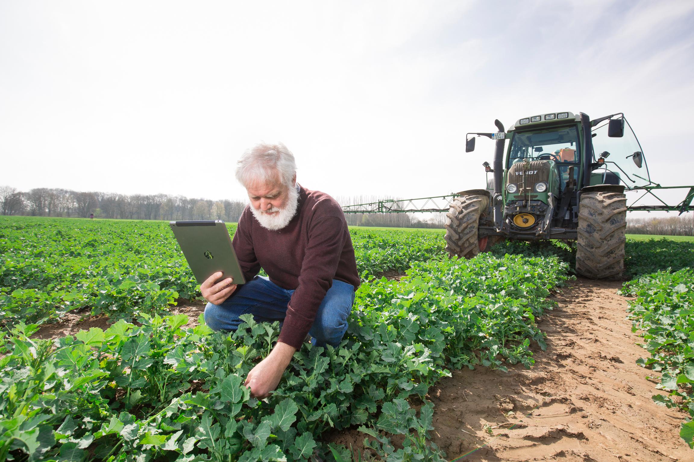 Bayer: Mehr Daten für effiziente Abläufe. Landwirt Rolf Schmidt kontrolliert Rapspflanzen auf dem Laacher Hof in Monheim.